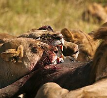 Killing on the Plains of Africa by Kevin Jeffery