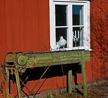 Old thing and a hen in the window by julie08