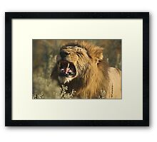 Mighty Roar Framed Print