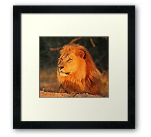Surveying his territory  Framed Print