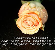 Learning to Bloom:  Feature Banner by daphsam