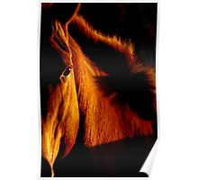 Stallion of amber Poster