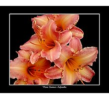 4 Lilies: Pink and Orange #2 Photographic Print