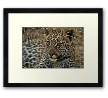 Leopard Cub upclose Framed Print