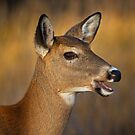 Profile of a Deer by Daniel  Parent