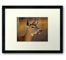 Profile of a Deer Framed Print