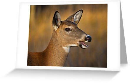 Profile of a Deer by Daniel  Parent