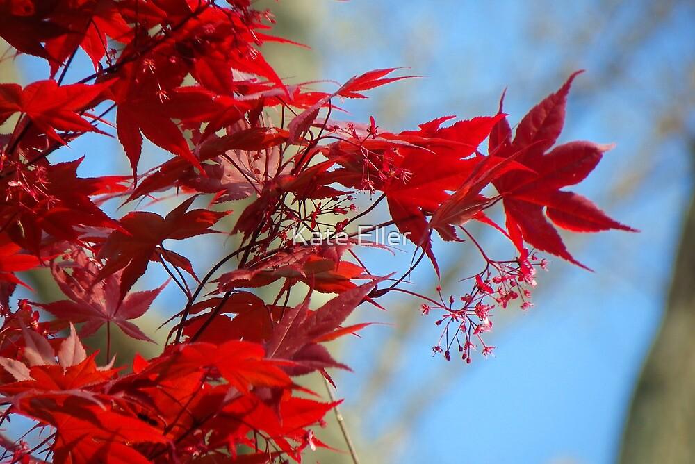 Japanese Maple by Kate Eller