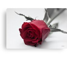Red Rose for Love Canvas Print