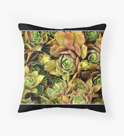 Hens & Chicks #2 Throw Pillow