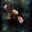 Piggy Ears by Jill Auville