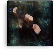 Piggy Ears Canvas Print