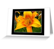 Day-Lily #1 Greeting Card