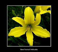 Lily: Yellow by Rose Santuci-Sofranko