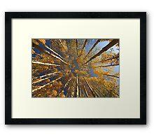 Kebler Pass Aspens II Framed Print