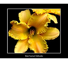 Lily: Yellow #2 Photographic Print