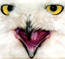 Owl Close UP by Svetlana Sewell