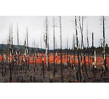 Undergrowth after a Brushfire- Oregon Plateau Photographic Print
