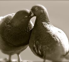 6 ?????? . Mi?o?? Ci  jednak nie wszystko wybaczy ,  'Love may forgive all . Tribute to Romeo and Juliet and True Love . Amen !!!  by Brown Sugar. Favorites: 12 Views:720 .  Thank you friends ! by © Andrzej Goszcz,M.D. Ph.D