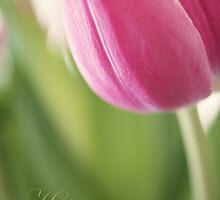 Tulip Birthday Card by Linda Hoey