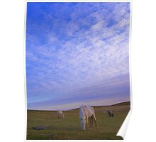 Cornwall: Ponies in the Evening Light Poster