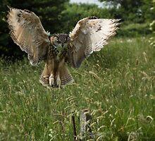 Eagle Owl by spredwood
