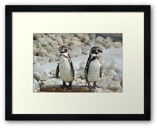 Penguins by linzi200