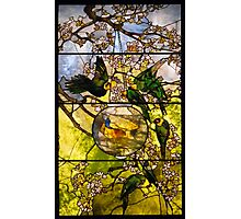 parakeets and goldfish bowl . Photographic Print