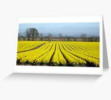 Daffodils Near Fettercairn Greeting Card