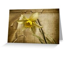 Spring is Fading Greeting Card
