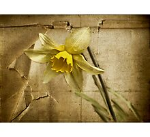 Spring is Fading Photographic Print