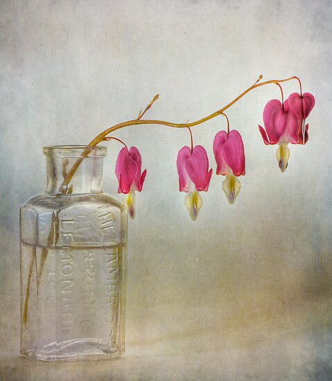Bleeding hearts by Mandy Disher