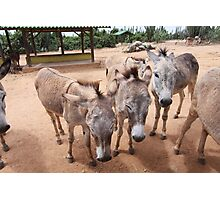 Aruba Donkeys Photographic Print