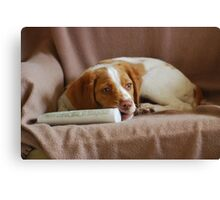 Brittany Puppy on Chair Canvas Print