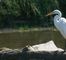 Great White Egret Sticker