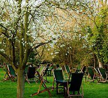 Orchard Tea Garden. by artfulvistas