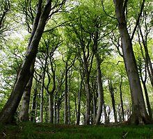 Trees by daffymjb