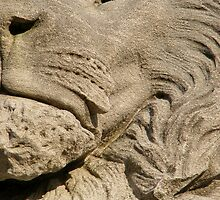 Lion  by elasita