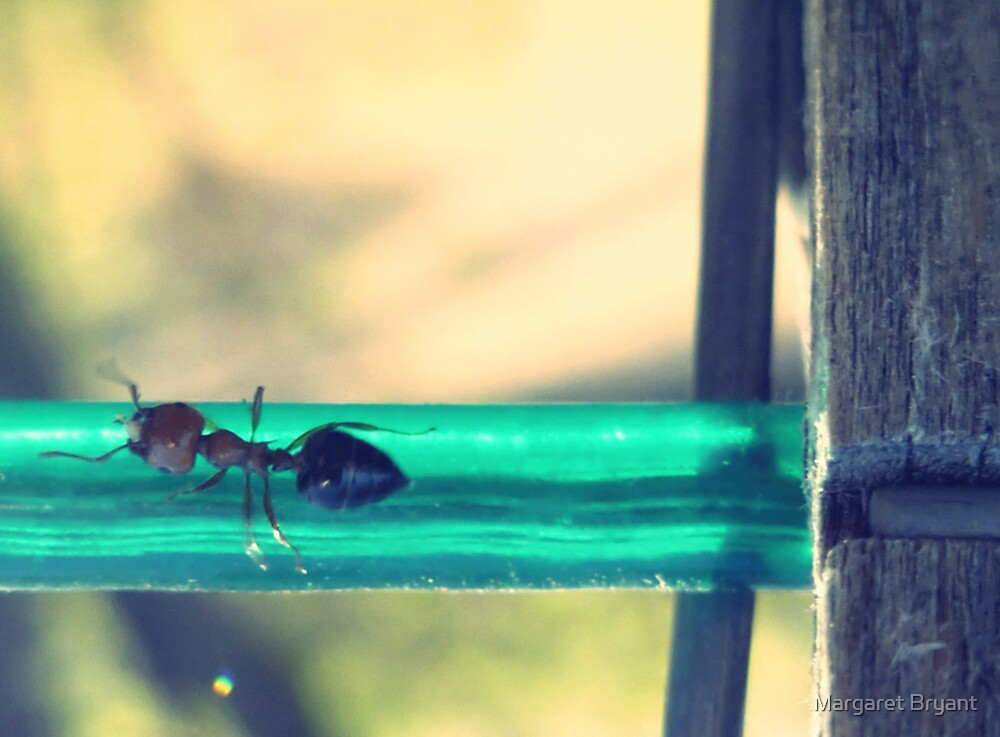 04-12-11:  Ants On The Clothesline by Margaret Bryant