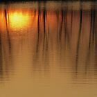 More Marsh Reflections by lorilee
