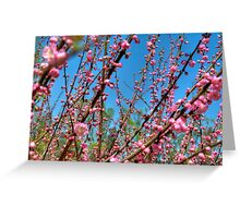 Cherry Blossoms in Beijing Greeting Card