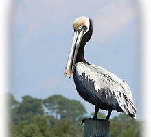 Cedar Key Pelican by Warren  Thompson