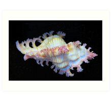 Tiny Murex Shell Art Print