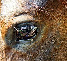 HorseFly by martinilogic