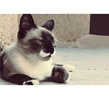 silent cat Photographic Print