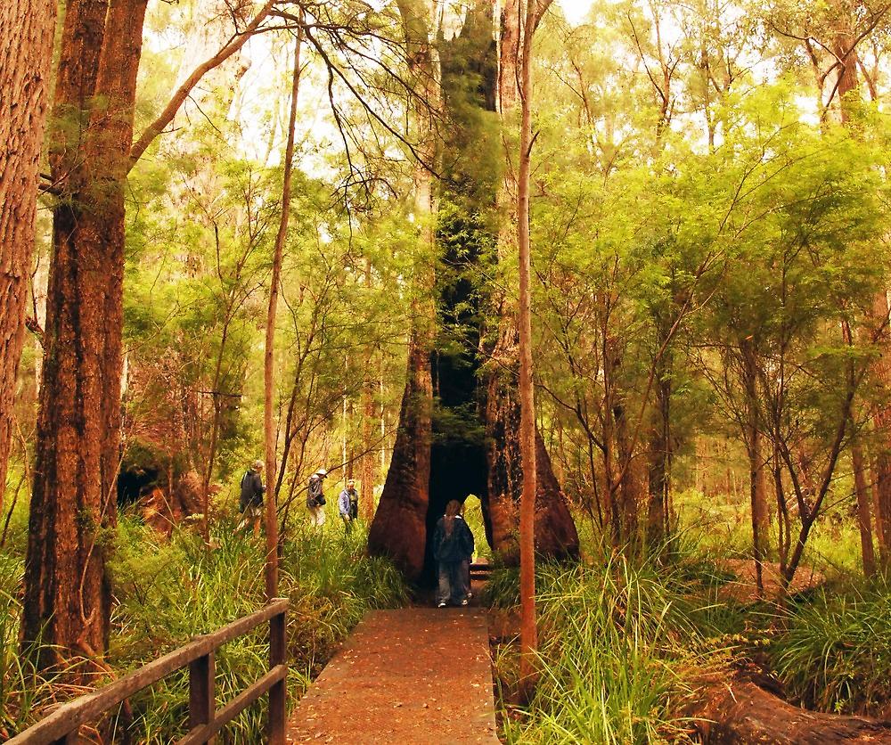 Walking through a tree by georgieboy98