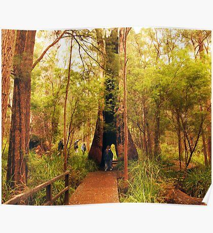 Walking through a tree Poster