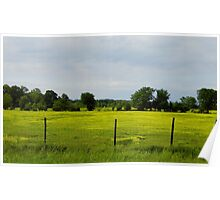 Cows  In Summer  Pasture Poster