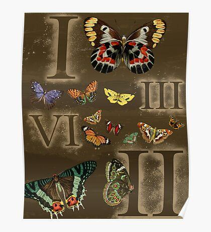 Let's Count Butterflies Poster
