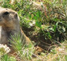 Prairie Dog, Wyoming Sticker